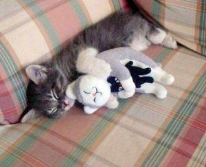 russian-doll-kitty